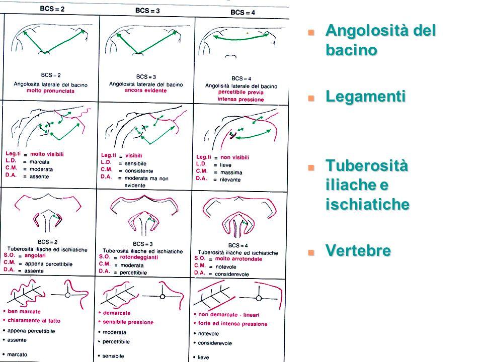 Angolosità del bacino Angolosità del bacino Legamenti Legamenti Tuberosità iliache e ischiatiche Tuberosità iliache e ischiatiche Vertebre Vertebre