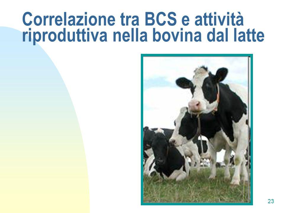 23 Correlazione tra BCS e attività riproduttiva nella bovina dal latte