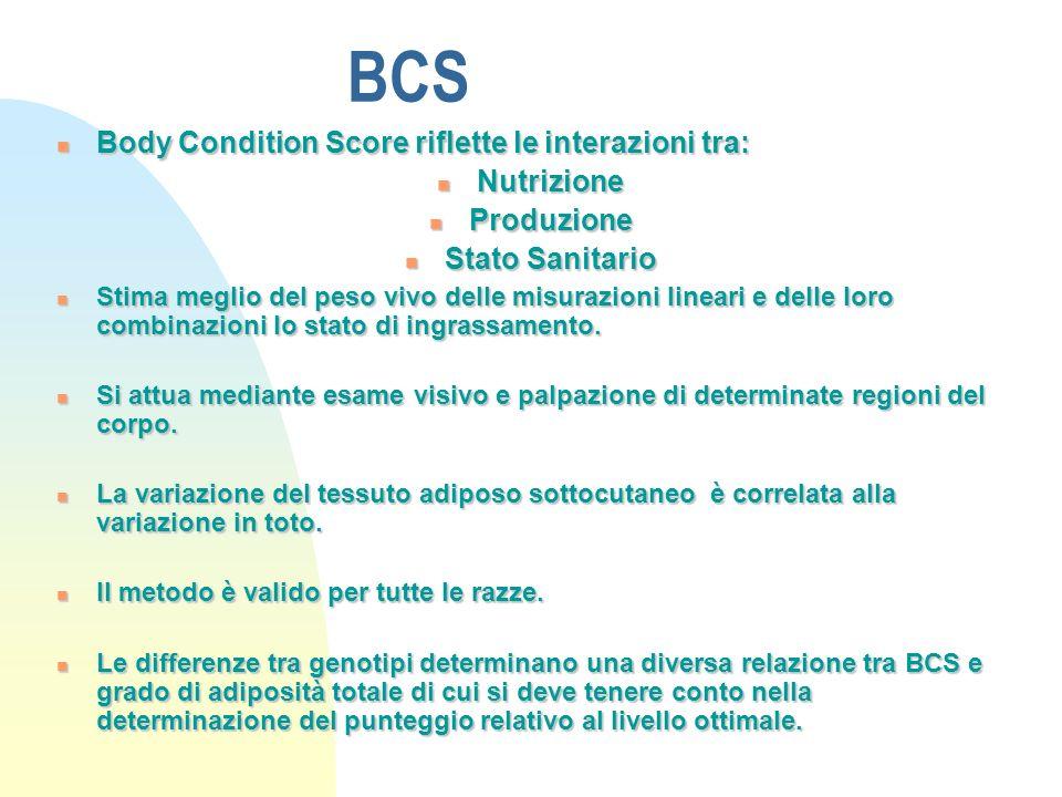 BCS Body Condition Score riflette le interazioni tra: Body Condition Score riflette le interazioni tra: Nutrizione Nutrizione Produzione Produzione Stato Sanitario Stato Sanitario Stima meglio del peso vivo delle misurazioni lineari e delle loro combinazioni lo stato di ingrassamento.