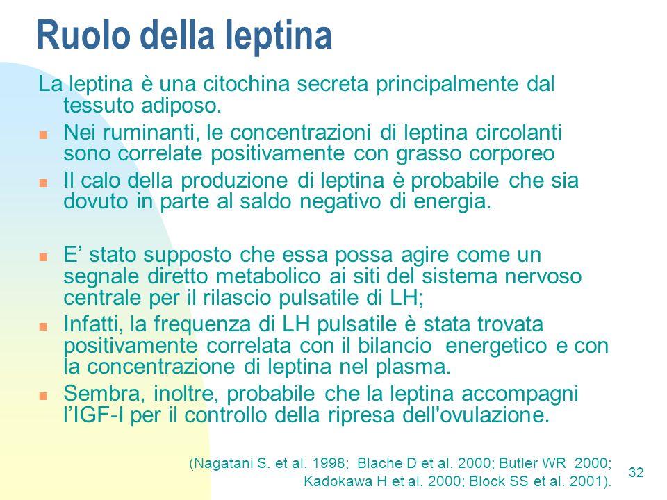 32 Ruolo della leptina La leptina è una citochina secreta principalmente dal tessuto adiposo.