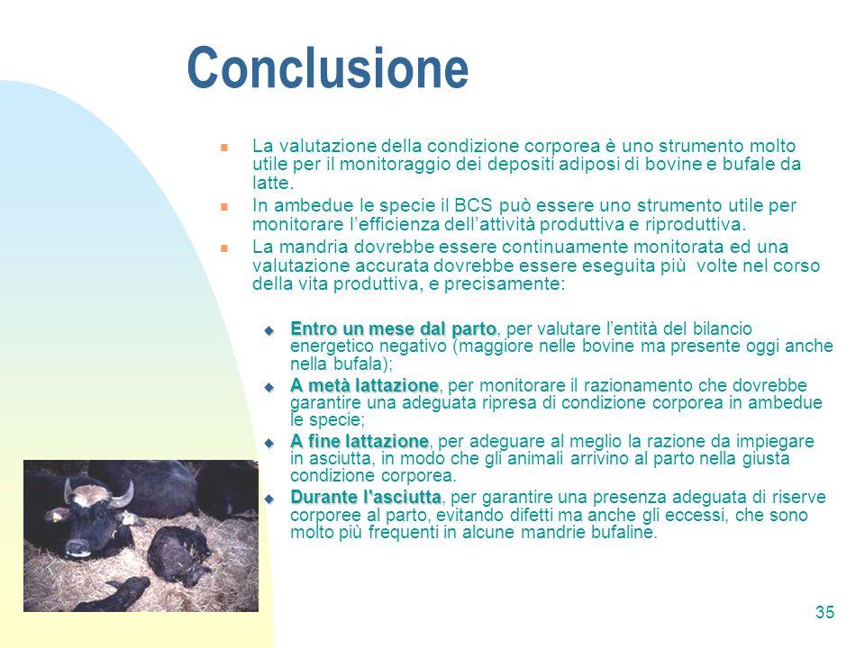 35 Conclusione La valutazione della condizione corporea è uno strumento molto utile per il monitoraggio dei depositi adiposi di bovine e bufale da latte.