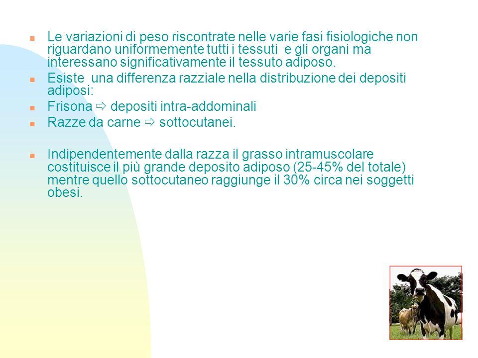 28 Sembra che le vacche in condizione corporea migliore sono quelle candidate a perdere maggiormente peso (+1,0 unità di BCS) con aumento dellintervallo parto-primo calore.