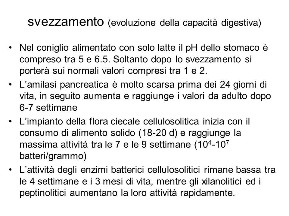 svezzamento (evoluzione della capacità digestiva) Nel coniglio alimentato con solo latte il pH dello stomaco è compreso tra 5 e 6.5.