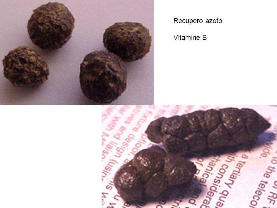 Recupero azoto Vitamine B