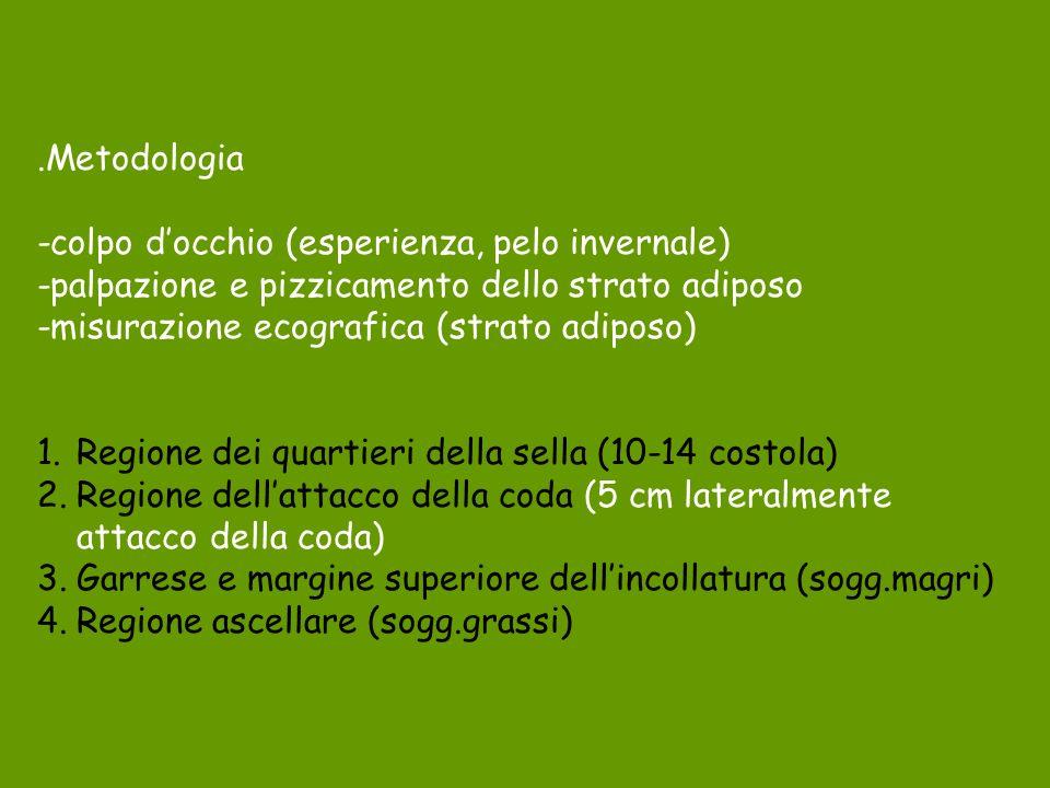 .Metodologia -colpo docchio (esperienza, pelo invernale) -palpazione e pizzicamento dello strato adiposo -misurazione ecografica (strato adiposo) 1.Re