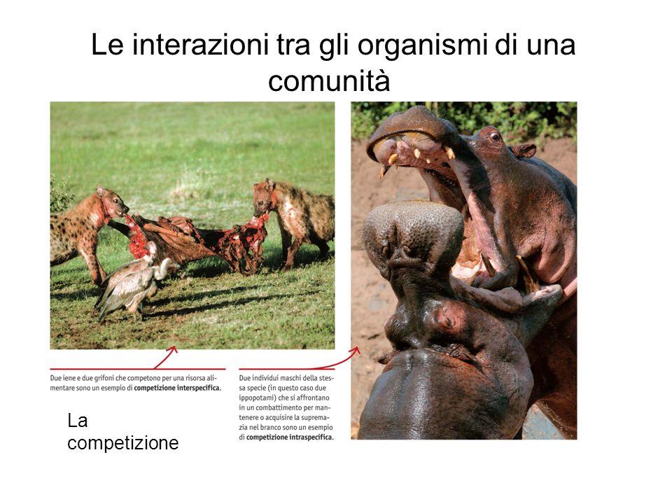 Le interazioni tra gli organismi di una comunità La competizione