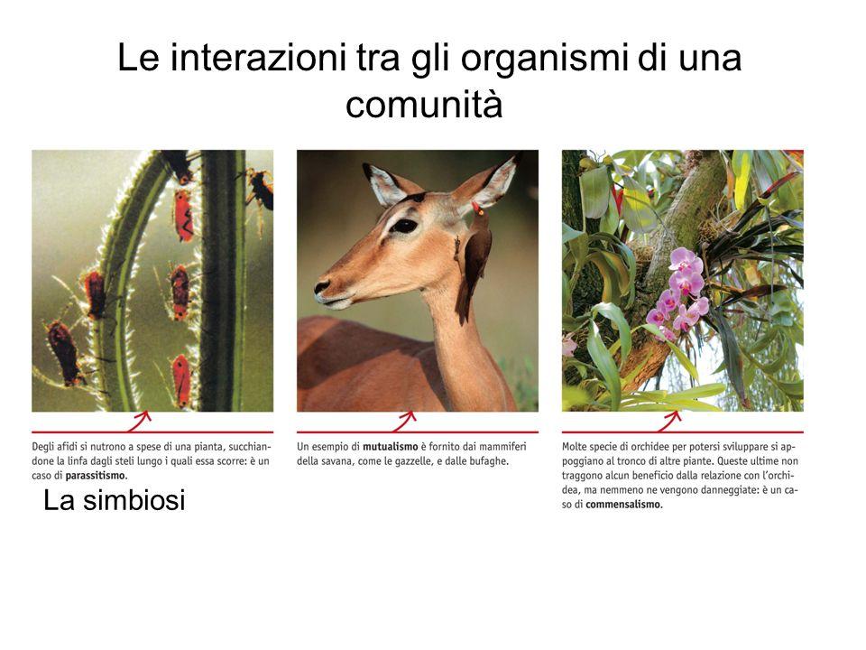 Le interazioni tra gli organismi di una comunità La simbiosi