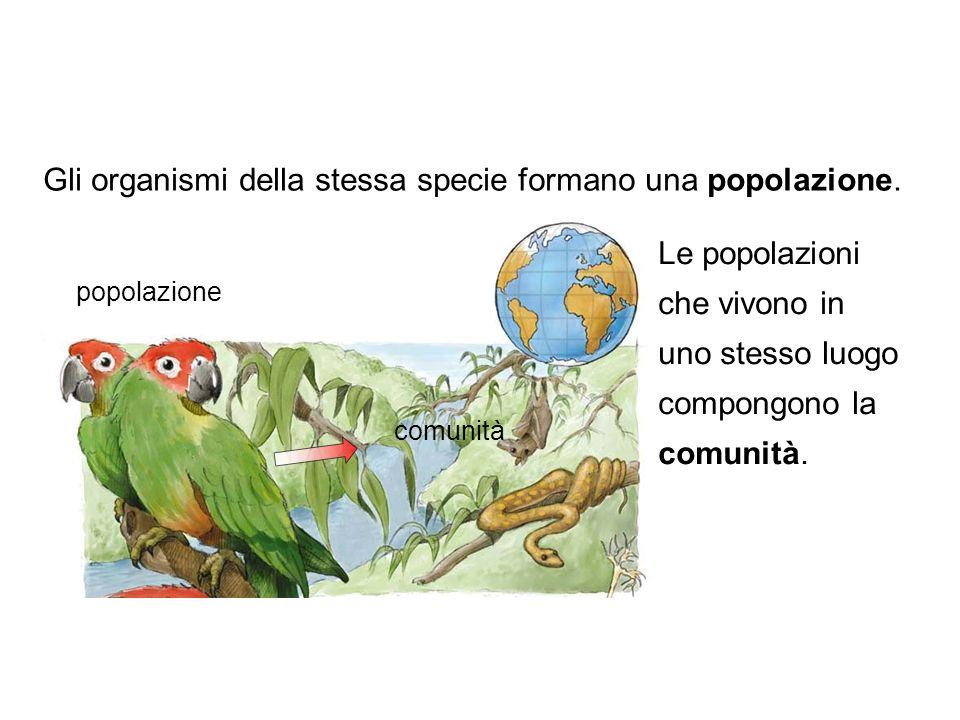 Le popolazioni che vivono in uno stesso luogo compongono la comunità. Gli organismi della stessa specie formano una popolazione. popolazione comunità
