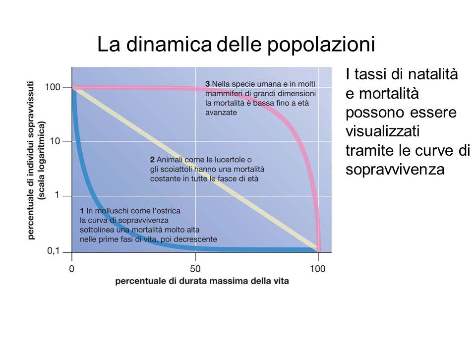 La dinamica delle popolazioni I tassi di natalità e mortalità possono essere visualizzati tramite le curve di sopravvivenza