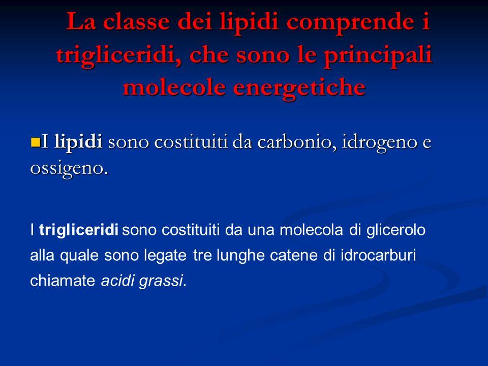 La classe dei lipidi comprende i trigliceridi, che sono le principali molecole energetiche La classe dei lipidi comprende i trigliceridi, che sono le