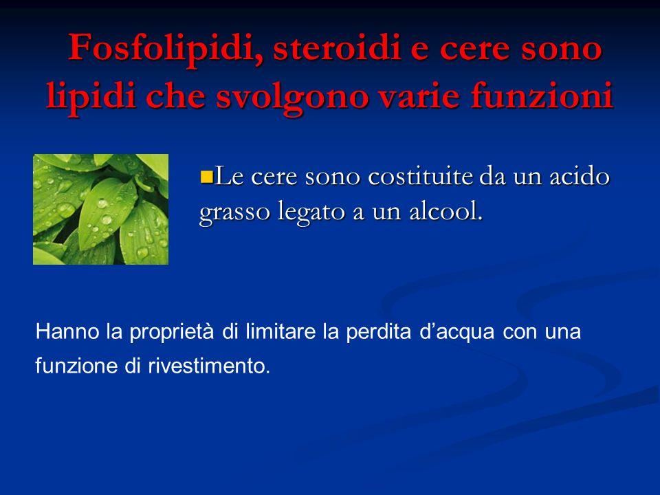 Fosfolipidi, steroidi e cere sono lipidi che svolgono varie funzioni Fosfolipidi, steroidi e cere sono lipidi che svolgono varie funzioni Le cere sono