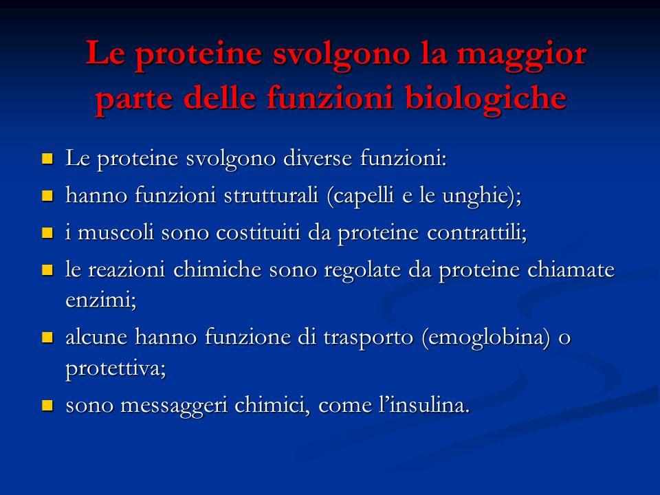 Le proteine svolgono la maggior parte delle funzioni biologiche Le proteine svolgono la maggior parte delle funzioni biologiche Le proteine svolgono d