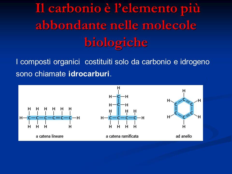 Il carbonio è lelemento più abbondante nelle molecole biologiche Il carbonio è lelemento più abbondante nelle molecole biologiche I composti organici