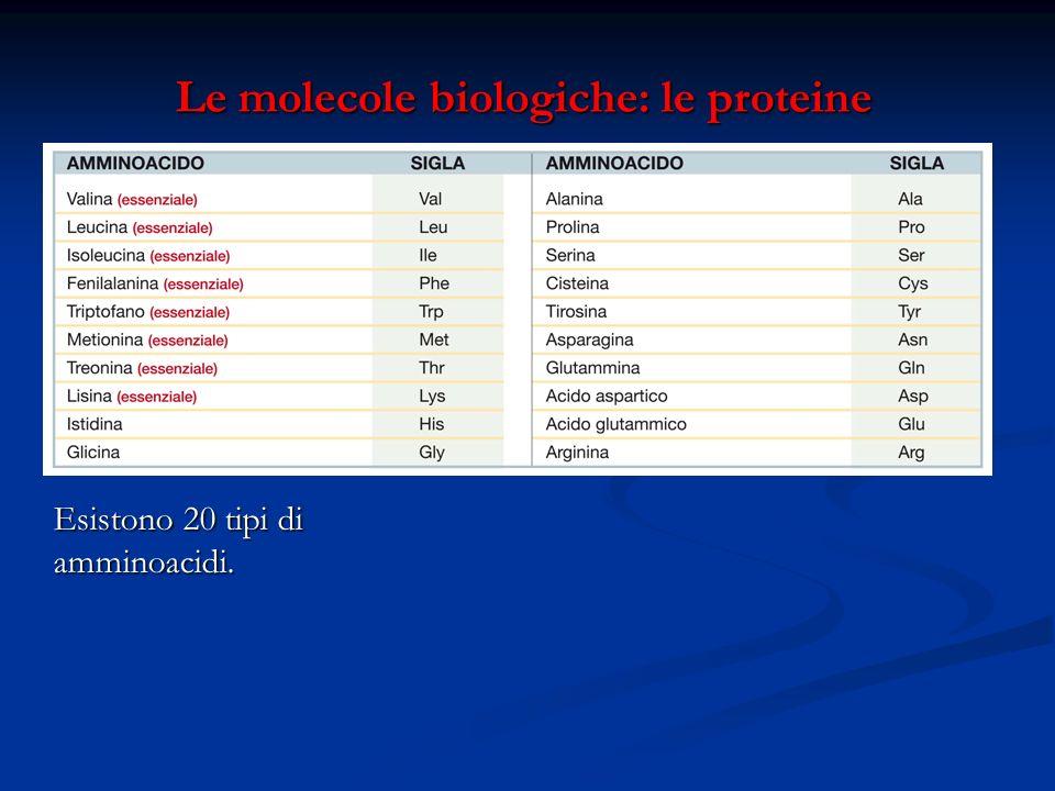 Le molecole biologiche: le proteine Le molecole biologiche: le proteine Esistono 20 tipi di amminoacidi.