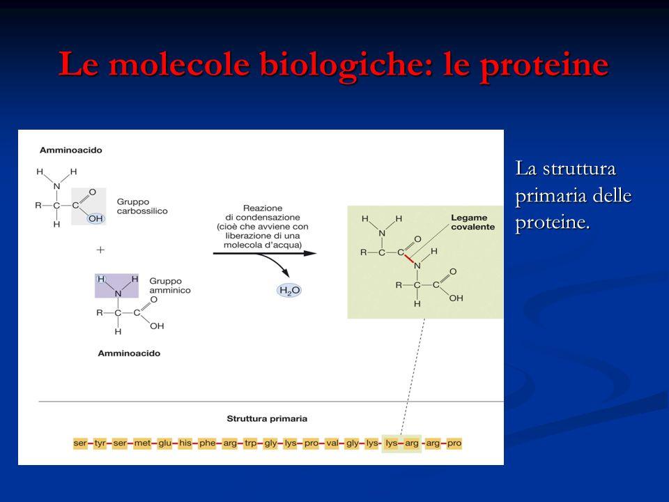 Le molecole biologiche: le proteine Le molecole biologiche: le proteine La struttura primaria delle proteine.