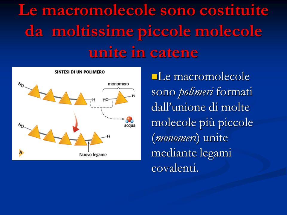 Le macromolecole sono costituite da moltissime piccole molecole unite in catene Le macromolecole sono polimeri formati dallunione di molte molecole pi