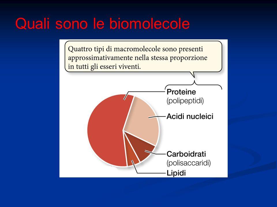 Quali sono le biomolecole