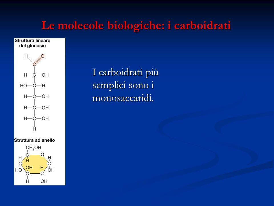 Le molecole biologiche: i carboidrati Le molecole biologiche: i carboidrati I carboidrati più semplici sono i monosaccaridi.