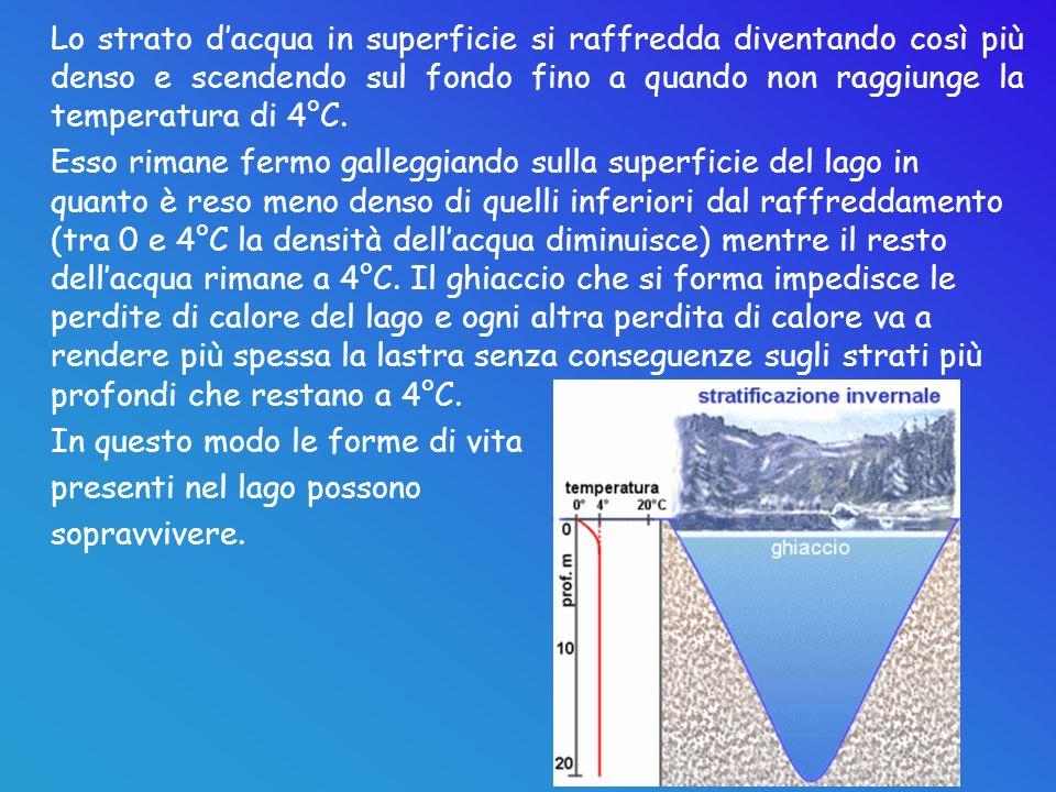 Lo strato dacqua in superficie si raffredda diventando così più denso e scendendo sul fondo fino a quando non raggiunge la temperatura di 4°C. Esso ri