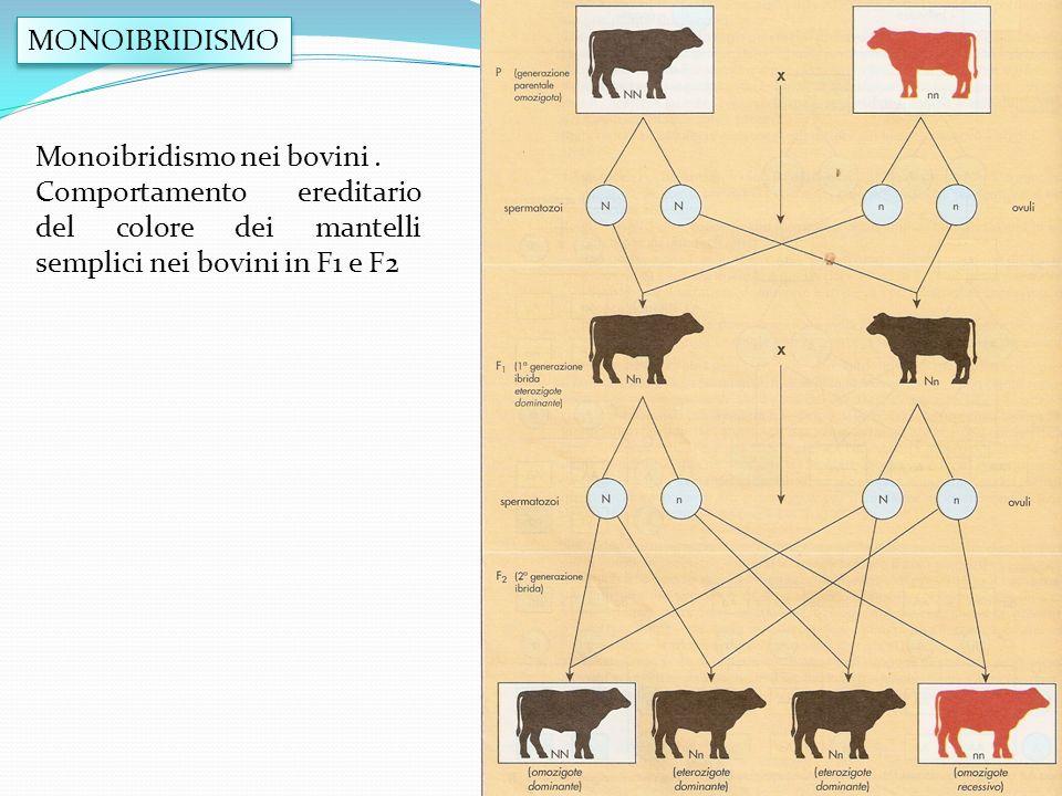 MONOIBRIDISMO Monoibridismo nei bovini. Comportamento ereditario del colore dei mantelli semplici nei bovini in F1 e F2
