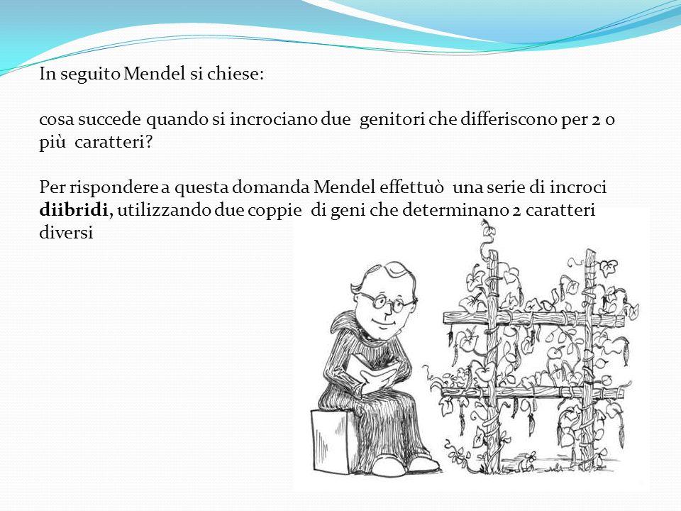 In seguito Mendel si chiese: cosa succede quando si incrociano due genitori che differiscono per 2 o più caratteri? Per rispondere a questa domanda Me