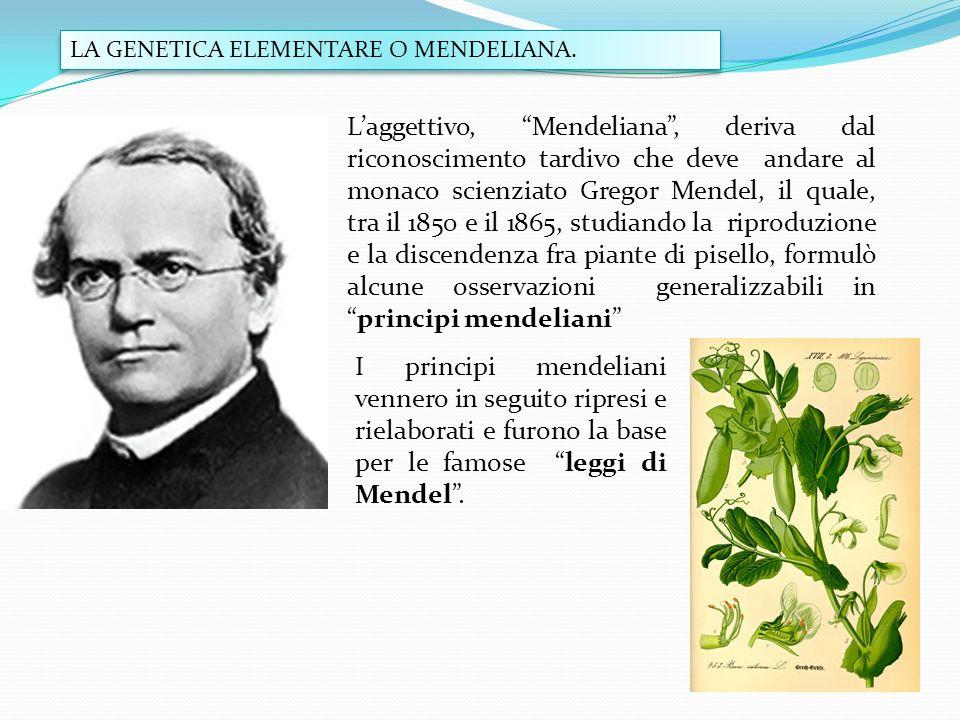 LA GENETICA ELEMENTARE O MENDELIANA. Laggettivo, Mendeliana, deriva dal riconoscimento tardivo che deve andare al monaco scienziato Gregor Mendel, il