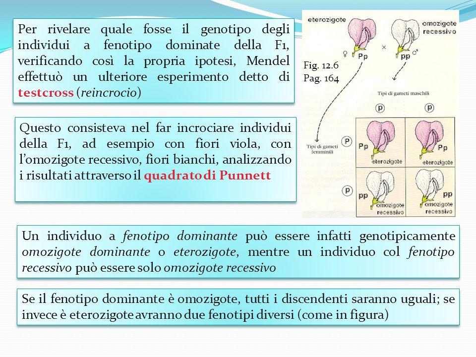 Per rivelare quale fosse il genotipo degli individui a fenotipo dominate della F1, verificando così la propria ipotesi, Mendel effettuò un ulteriore e