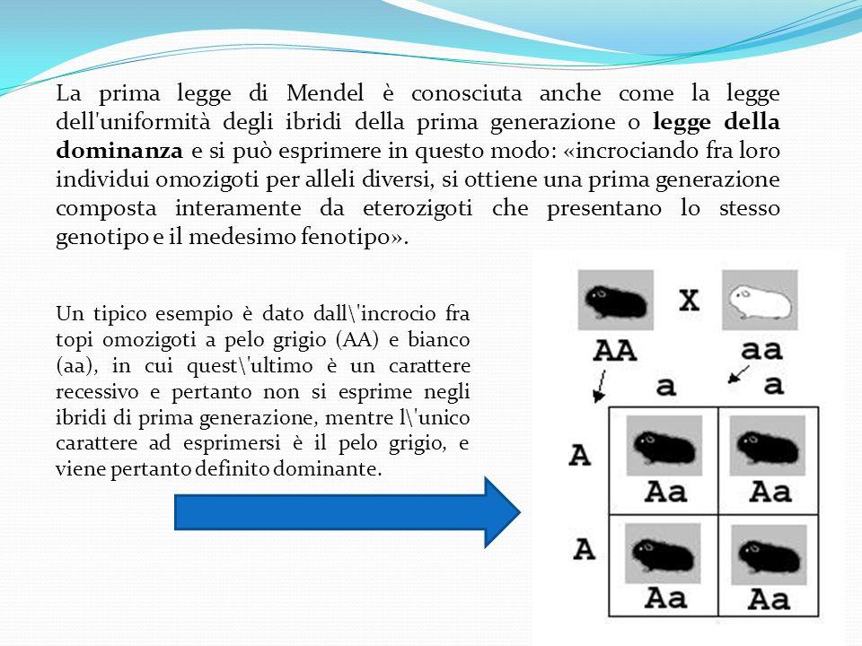 La prima legge di Mendel è conosciuta anche come la legge dell'uniformità degli ibridi della prima generazione o legge della dominanza e si può esprim