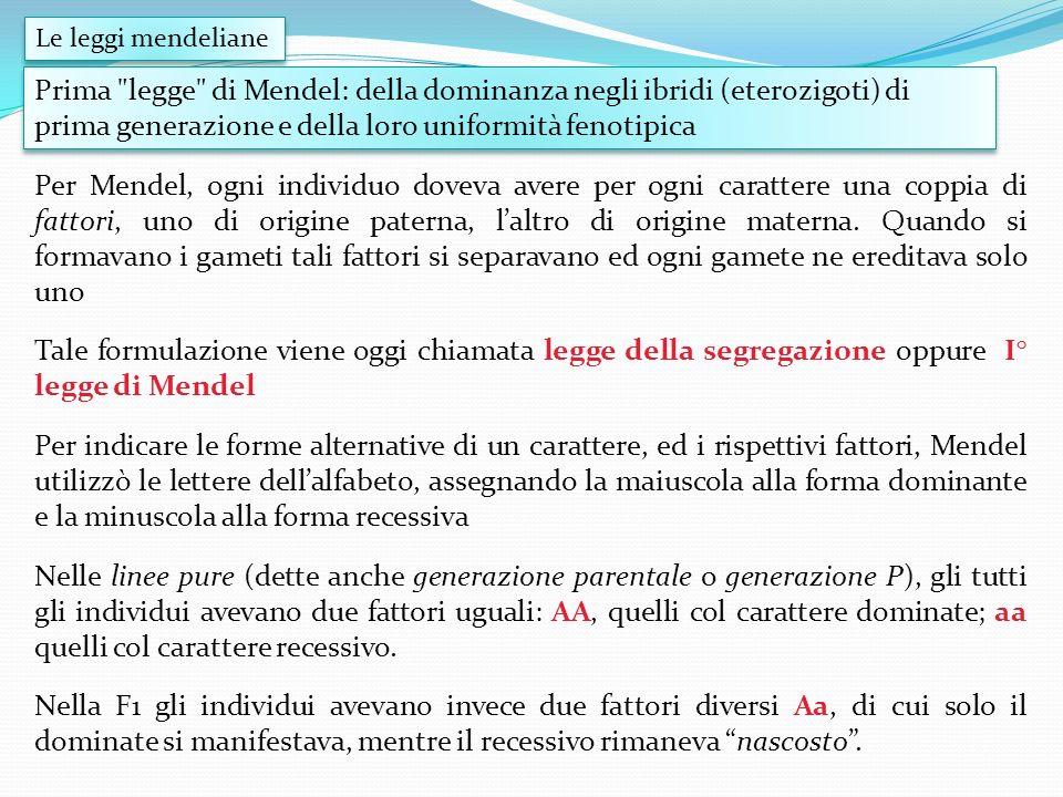 Per Mendel, ogni individuo doveva avere per ogni carattere una coppia di fattori, uno di origine paterna, laltro di origine materna. Quando si formava