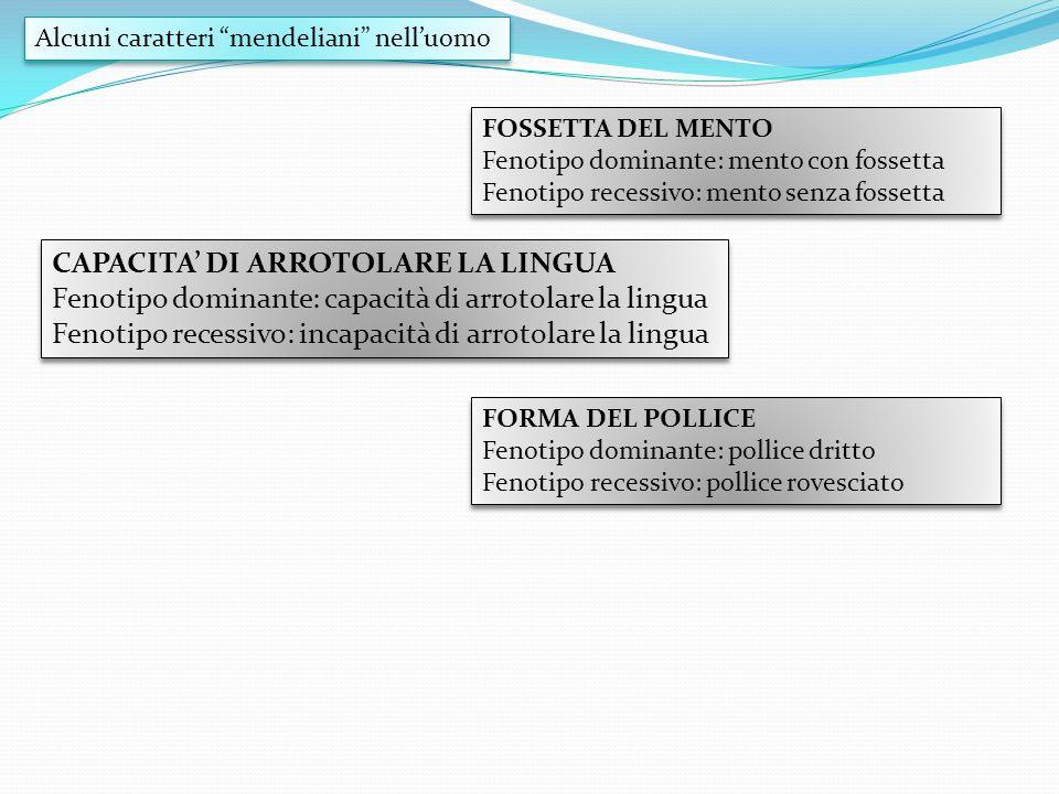 CAPACITA DI ARROTOLARE LA LINGUA Fenotipo dominante: capacità di arrotolare la lingua Fenotipo recessivo: incapacità di arrotolare la lingua CAPACITA