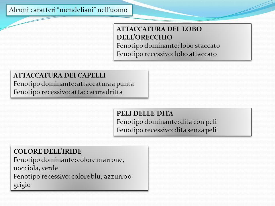 Alcuni caratteri mendeliani nelluomo COLORE DELLIRIDE Fenotipo dominante: colore marrone, nocciola, verde Fenotipo recessivo: colore blu, azzurro o gr
