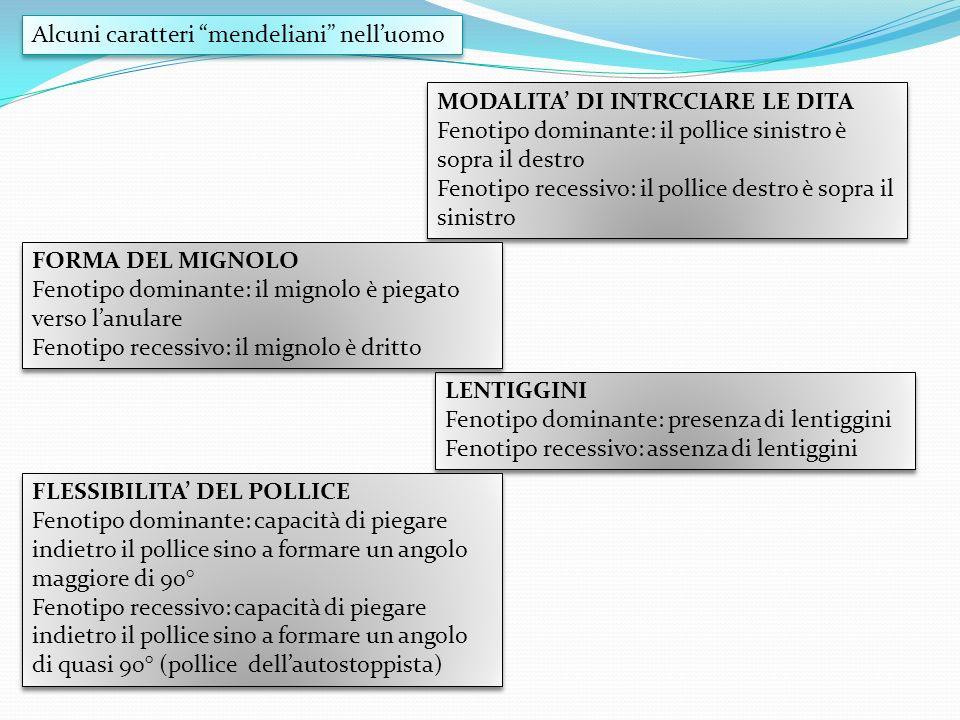 Alcuni caratteri mendeliani nelluomo LENTIGGINI Fenotipo dominante: presenza di lentiggini Fenotipo recessivo: assenza di lentiggini LENTIGGINI Fenoti