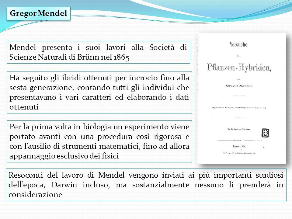 Mendel si chiese se la separazione dei due alleli di un dato gene potesse influenzare quella degli alleli di un gene differente.