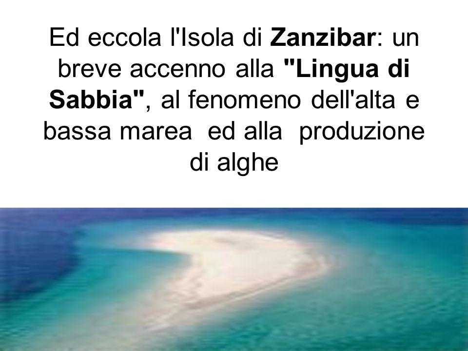 Ed eccola l Isola di Zanzibar: un breve accenno alla Lingua di Sabbia , al fenomeno dell alta e bassa marea ed alla produzione di alghe