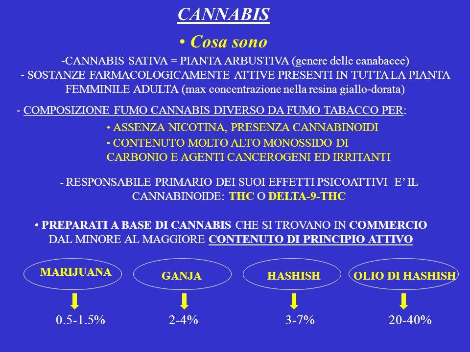 CANNABIS Cosa sono -CANNABIS SATIVA = PIANTA ARBUSTIVA (genere delle canabacee) - SOSTANZE FARMACOLOGICAMENTE ATTIVE PRESENTI IN TUTTA LA PIANTA FEMMI