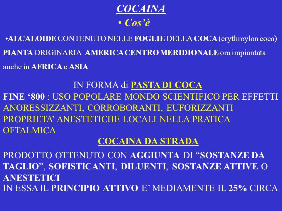 COCAINA ALCALOIDE CONTENUTO NELLE FOGLIE DELLA COCA (erythroylon coca) PIANTA ORIGINARIA AMERICA CENTRO MERIDIONALE ora impiantata anche in AFRICA e A