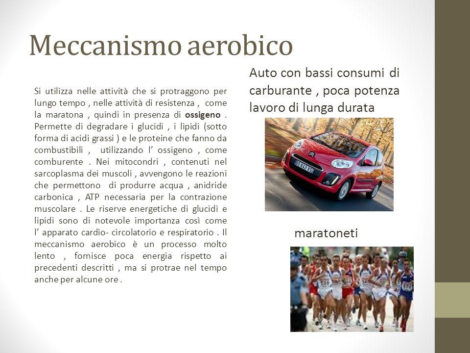 Meccanismo aerobico Si utilizza nelle attività che si protraggono per lungo tempo, nelle attività di resistenza, come la maratona, quindi in presenza