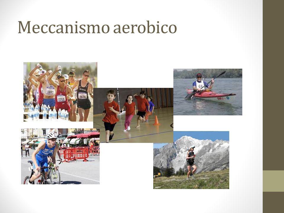 Meccanismo aerobico