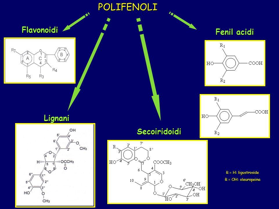 POLIFENOLI Fenil acidi Flavonoidi Secoiridoidi Lignani R = H: ligustroside R = OH: oleuropeina