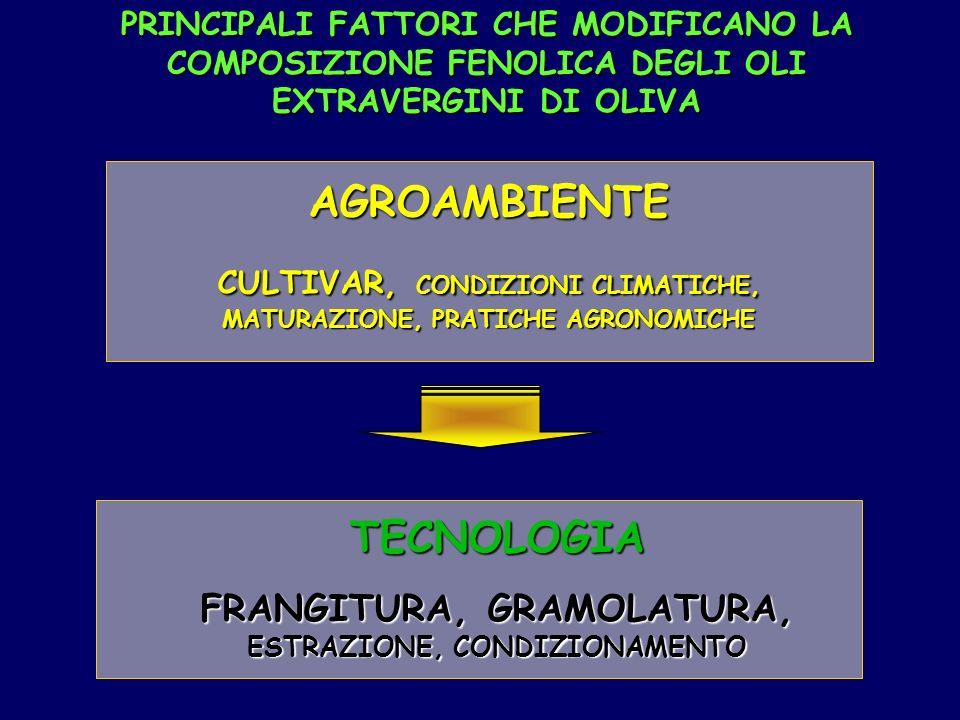 PRINCIPALI FATTORI CHE MODIFICANO LA COMPOSIZIONE FENOLICA DEGLI OLI EXTRAVERGINI DI OLIVA AGROAMBIENTE CULTIVAR, CONDIZIONI CLIMATICHE, MATURAZIONE, PRATICHE AGRONOMICHE TECNOLOGIA FRANGITURA, GRAMOLATURA, ESTRAZIONE, CONDIZIONAMENTO