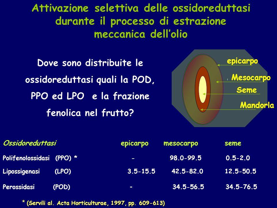 Ossidoreduttasi epicarpo mesocarpo seme Polifenolossidasi (PPO) * - 98.0-99.5 0.5-2.0 Lipossigenasi (LPO) 3.5-15.5 42.5-82.0 12.5-50.5 Perossidasi (POD) - 34.5-56.5 34.5-76.5 epicarpo Seme Mesocarpo Mandorla Dove sono distribuite le ossidoreduttasi quali la POD, PPO ed LPO e la frazione fenolica nel frutto.
