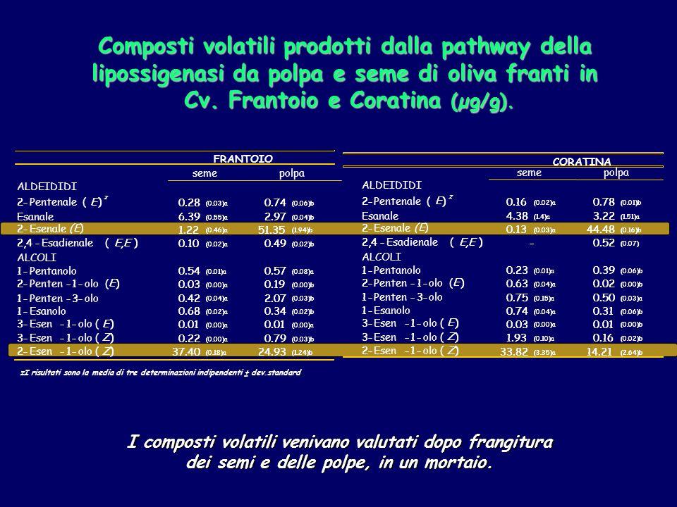 zI risultati sono la media di tre determinazioni indipendenti ± dev.standard Composti volatili prodotti dalla pathway della lipossigenasi da polpa e seme di oliva franti in Cv.