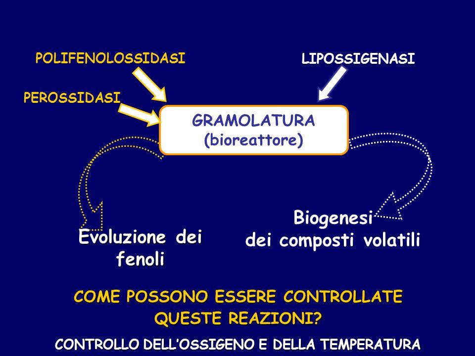 POLIFENOLOSSIDASI LIPOSSIGENASI PEROSSIDASI Biogenesi dei composti volatili Evoluzione dei fenoli COME POSSONO ESSERE CONTROLLATE QUESTE REAZIONI.