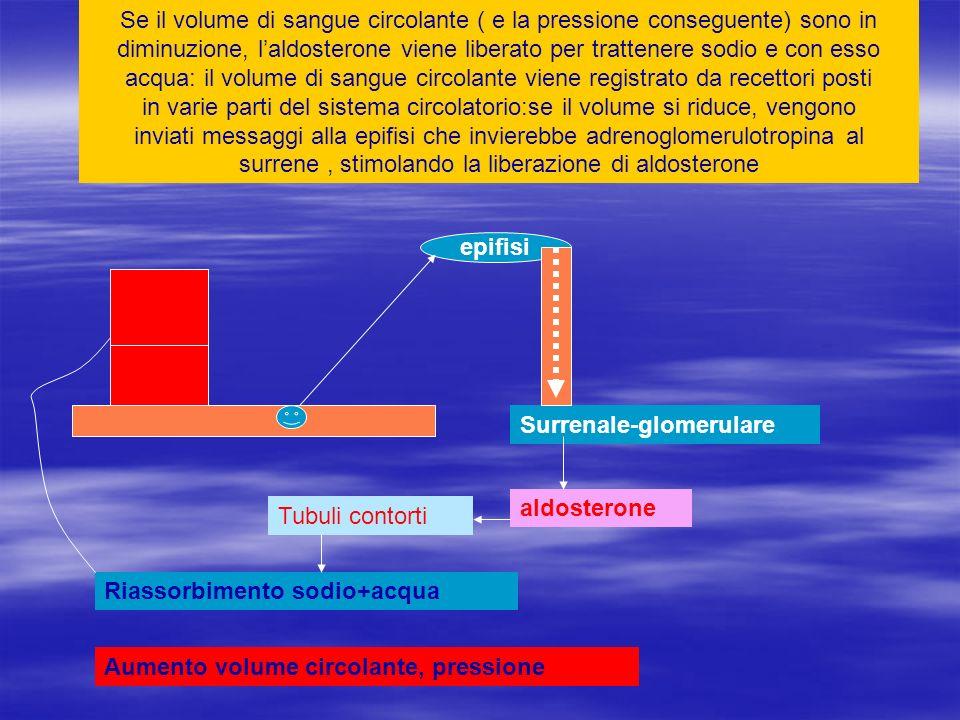 Se il volume di sangue circolante ( e la pressione conseguente) sono in diminuzione, laldosterone viene liberato per trattenere sodio e con esso acqua
