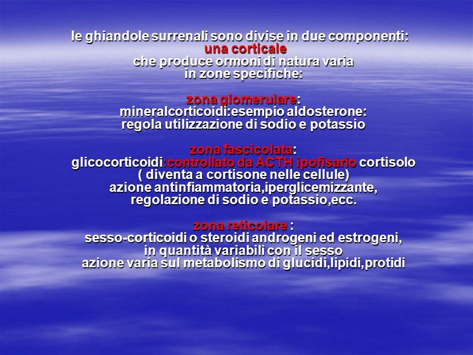 le ghiandole surrenali sono divise in due componenti: una corticale che produce ormoni di natura varia in zone specifiche: zona glomerulare: mineralco