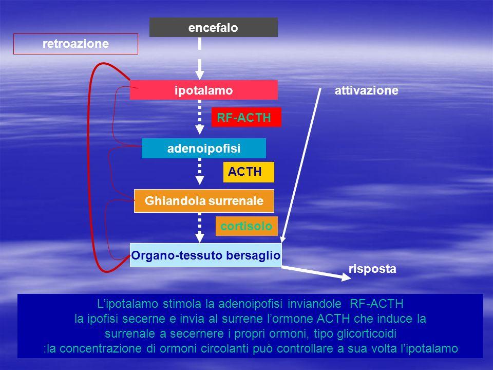 ipotalamo adenoipofisi Ghiandola surrenale Organo-tessuto bersaglio attivazione risposta retroazione encefalo Lipotalamo stimola la adenoipofisi invia