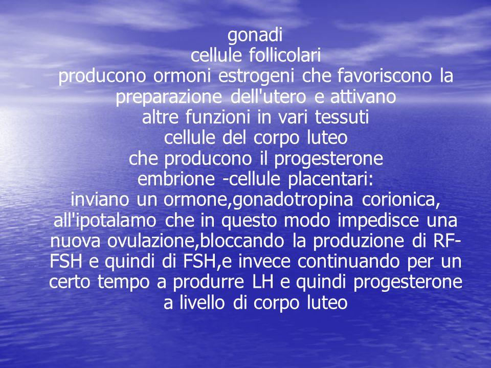 gonadi cellule follicolari producono ormoni estrogeni che favoriscono la preparazione dell'utero e attivano altre funzioni in vari tessuti cellule del
