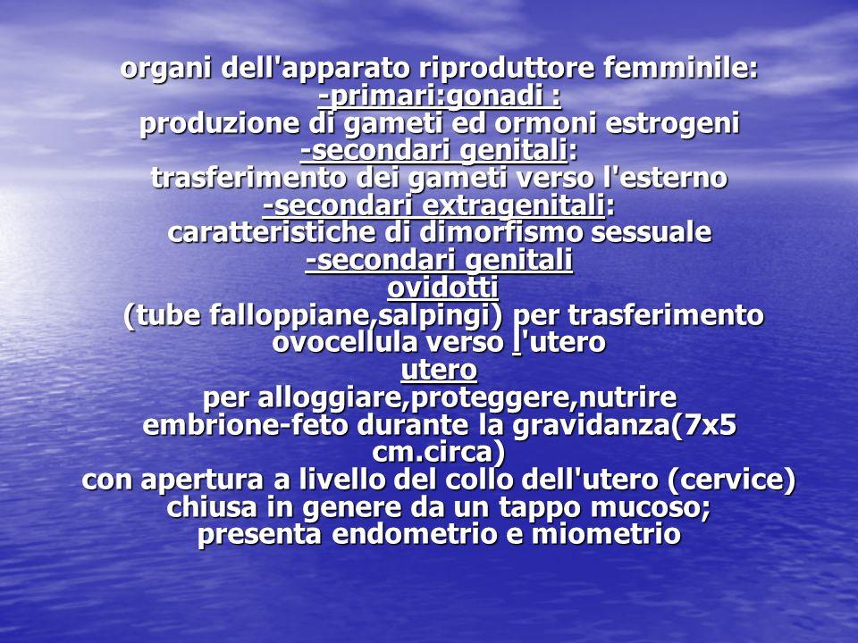 organi dell'apparato riproduttore femminile: -primari:gonadi : produzione di gameti ed ormoni estrogeni -secondari genitali: trasferimento dei gameti