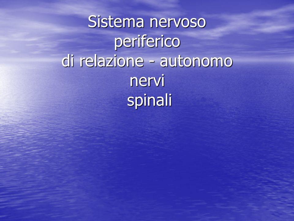Sistema nervoso periferico di relazione - autonomo nervi spinali