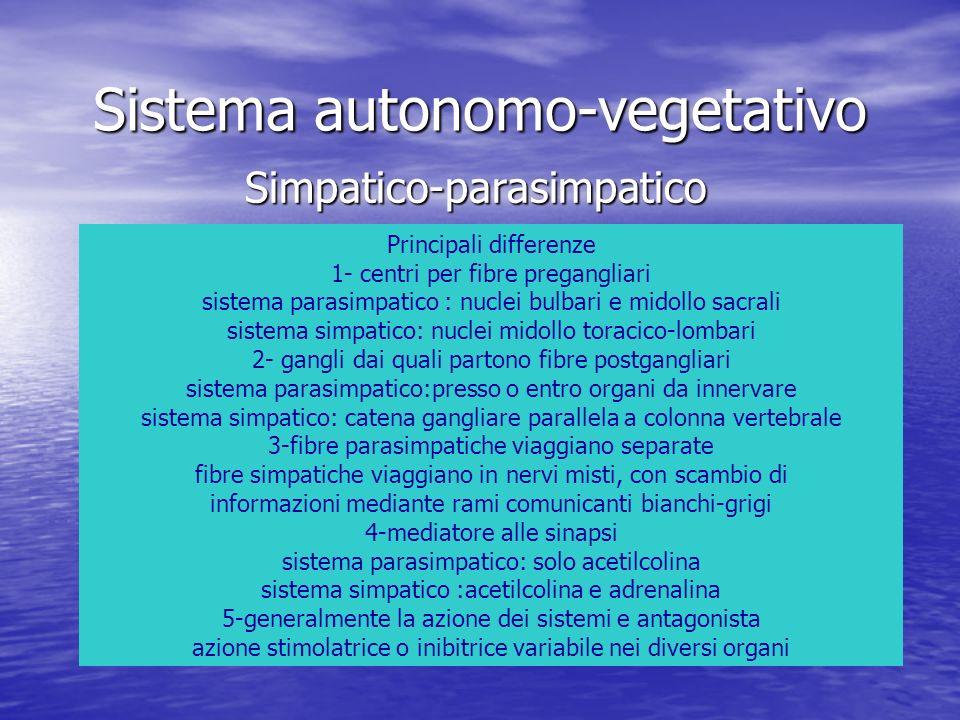 Sistema autonomo-vegetativo Simpatico-parasimpatico Principali differenze 1- centri per fibre pregangliari sistema parasimpatico : nuclei bulbari e mi